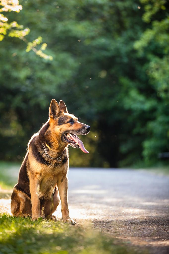 From Puppies To Senior Dogs Purebreed Dogs To Mutts And Easy To