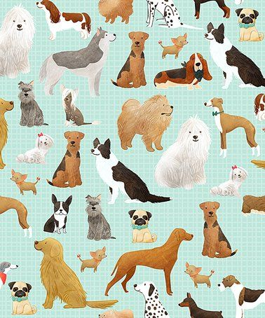 Best In Show Gift Wrap