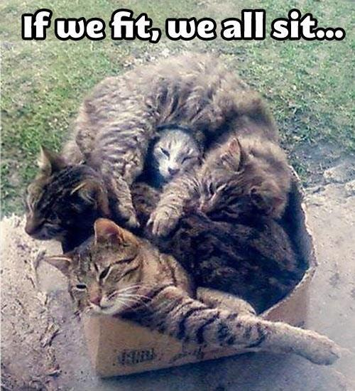 We All Fits So We Sits