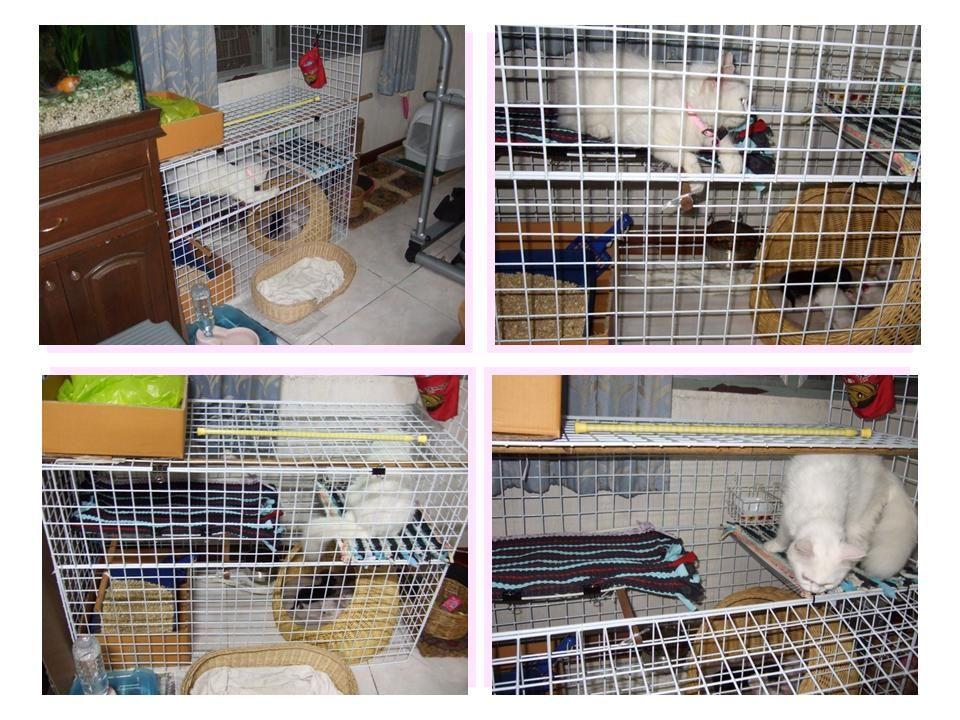 Pantip Com J8254833 ก นระเบ ยงก นแมวตก แบบไม ต องเจาะ แมว แมว