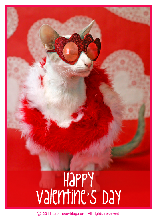 For Valentine S Day Cat Toys : Happy valentine s day from the cat meow catster cats