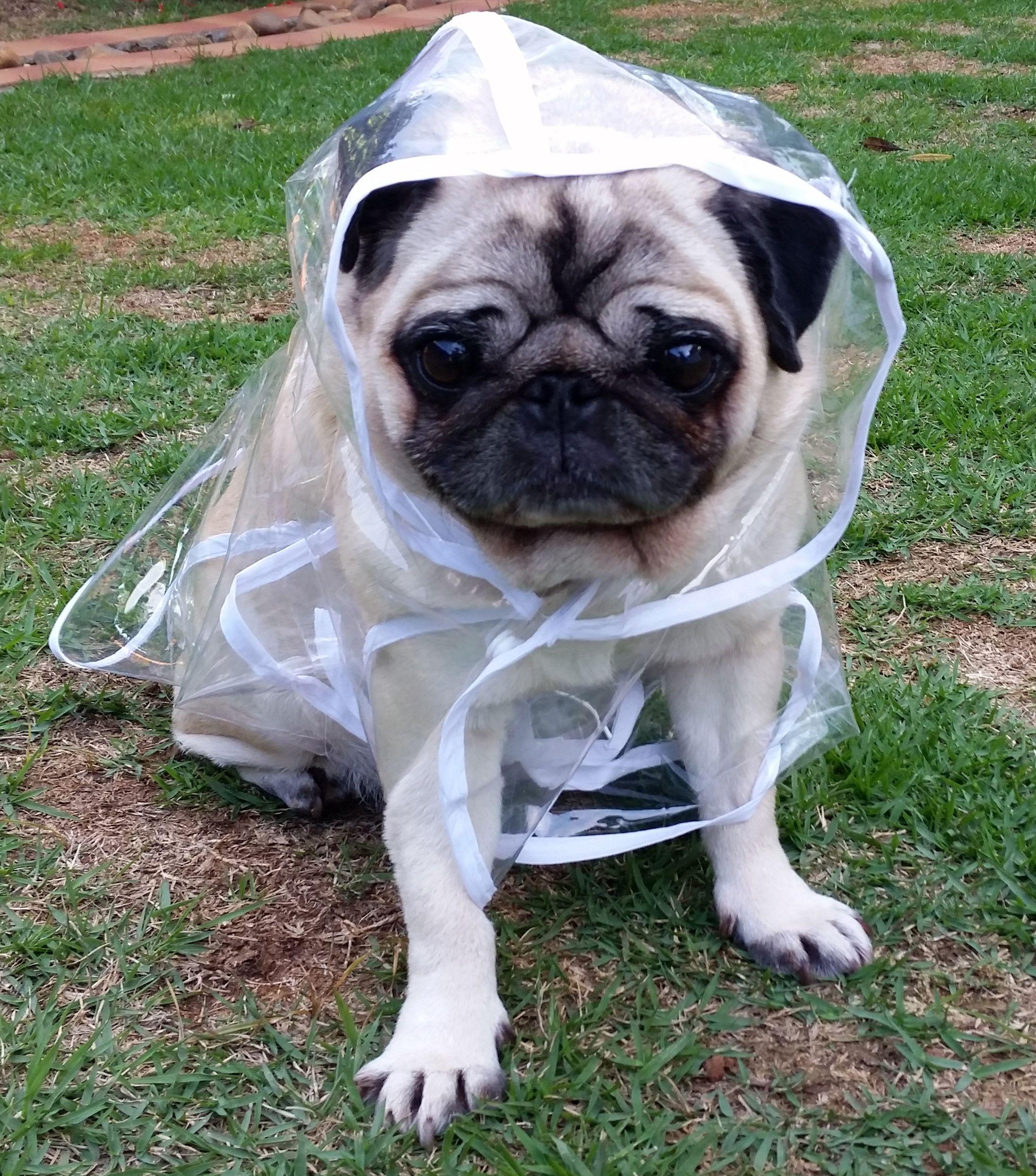 518994440 Capa de Chuva Para Cachorro Roupa De Chuva, Acessórios Para Cães, Roupa  Para Cachorro