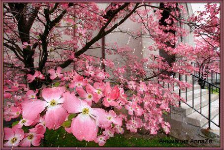 Animação árvore da mola de florescência na chuva, o AnnaZe autor