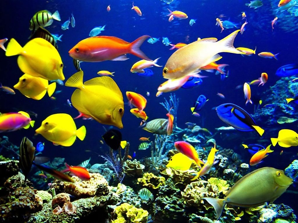 Beautiful Hd Wallpapers For Laptop Fish Wallpaper Fish Background Tropical Fish