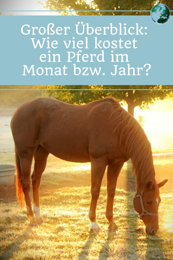 wie viel kostet ein pferd