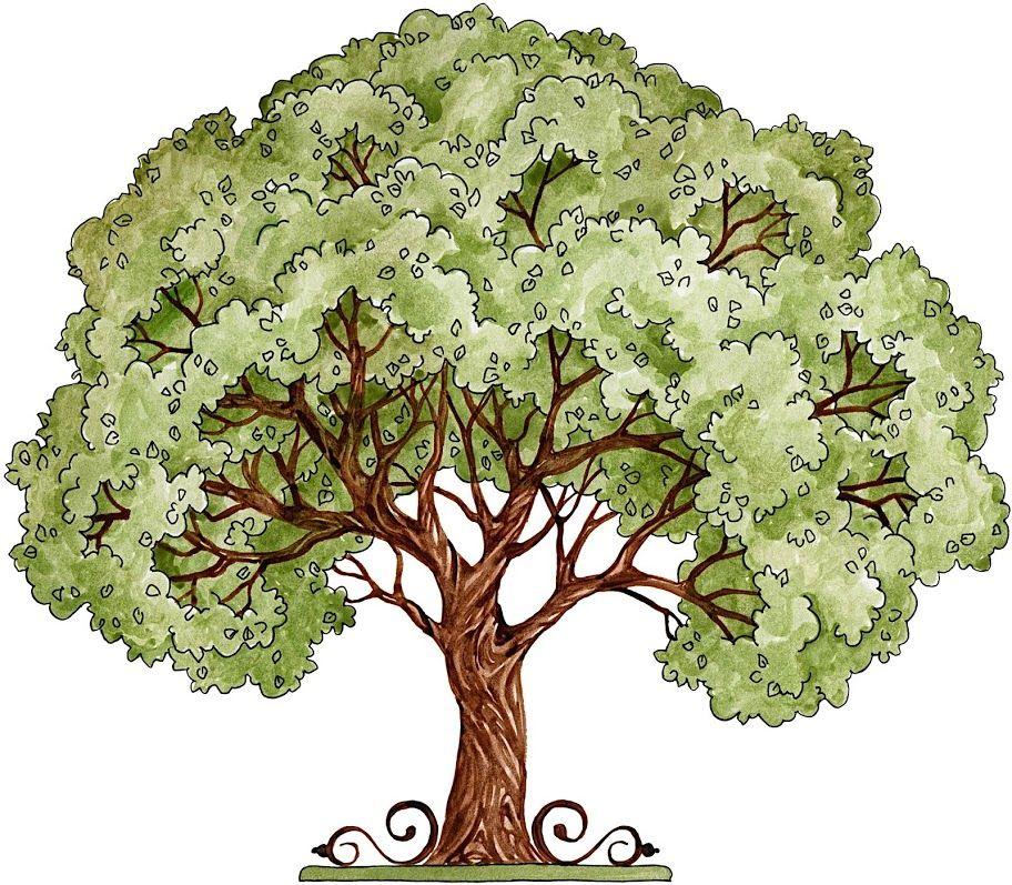 Mis Laminas Para Decoupage Tree Art Tree Watercolor Painting Tree Illustration