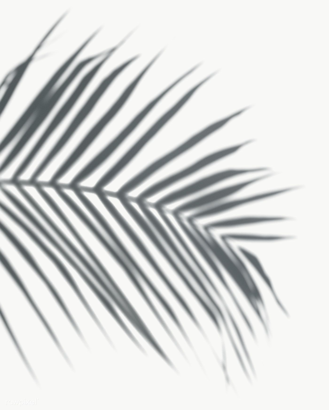 Shadow of palm leaves on a white wall | free image by