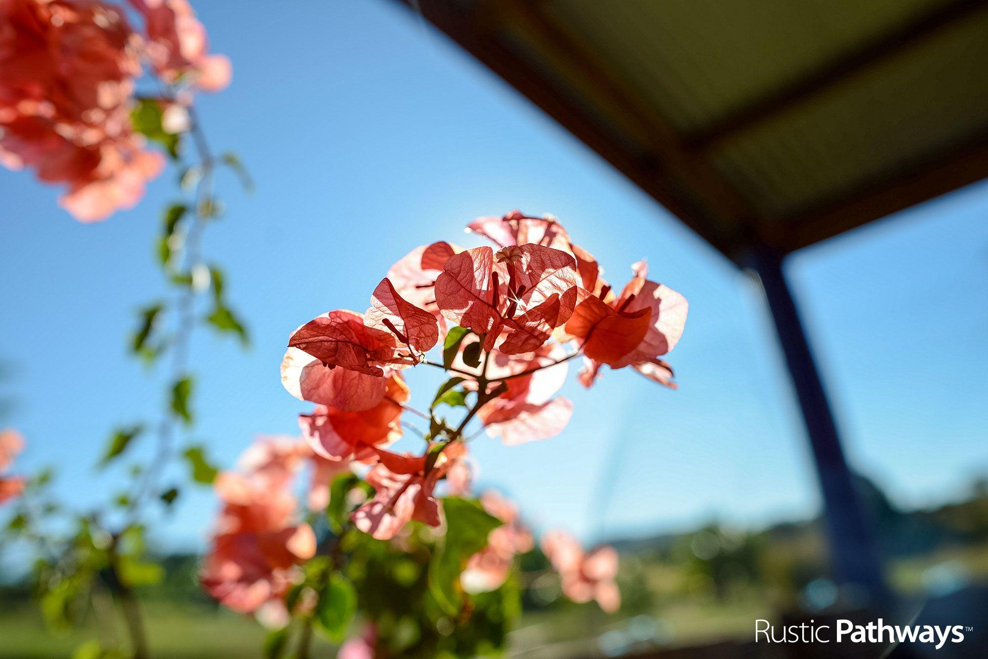 Flowers FIJI Zane Osler Rustic pathways, Fiji