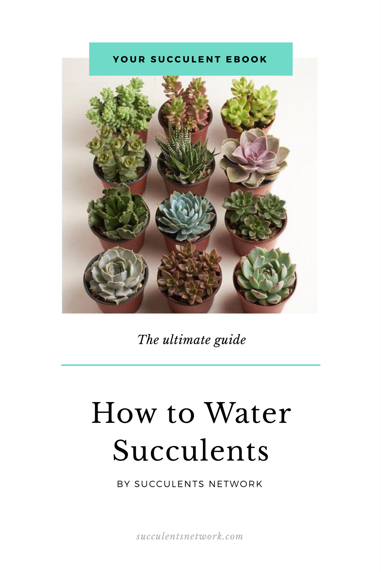 How To Water Succulents Etsy How To Water Succulents Succulents Plant Care