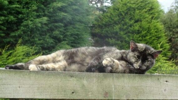 Molly enjoying the roof of the Avery ! 09/30/14