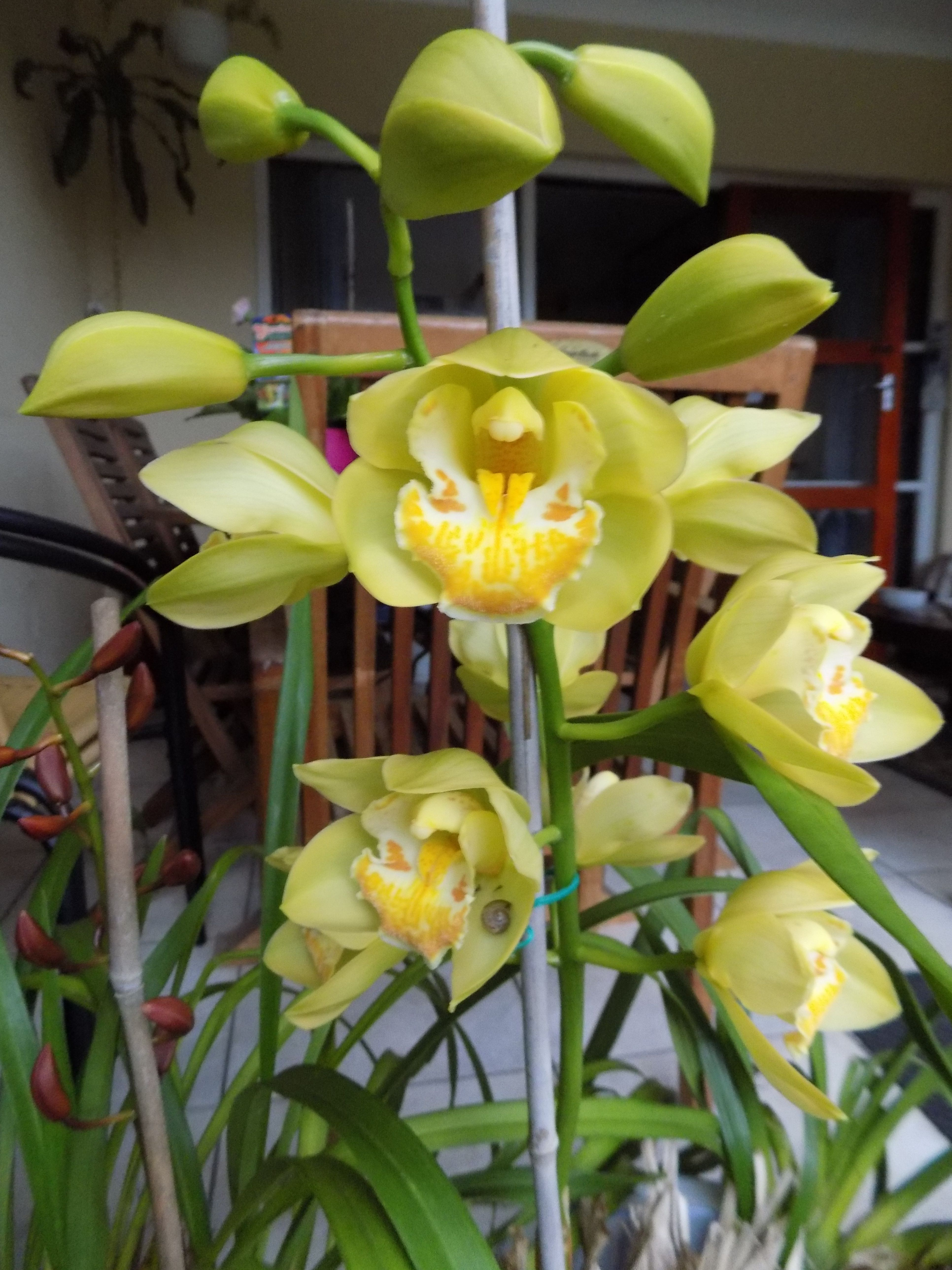 Home-grown orchids on my patio