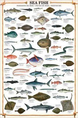 Sea Fish Wall Chart 59 Saltwater Species Poster Eurographics Sea Fish Fish Chart Salt Water Fish