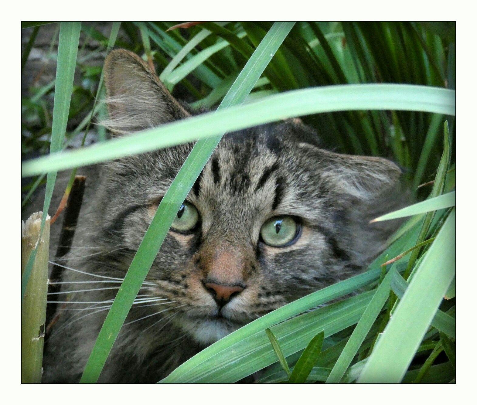 LOT firmy przewozace zwierzeta (With images) Animals, Cats