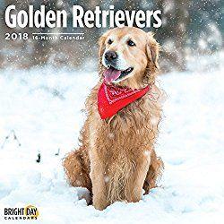 Golden Retrievers Calendar 2018 16 Month Wall Calendar 12 X 12