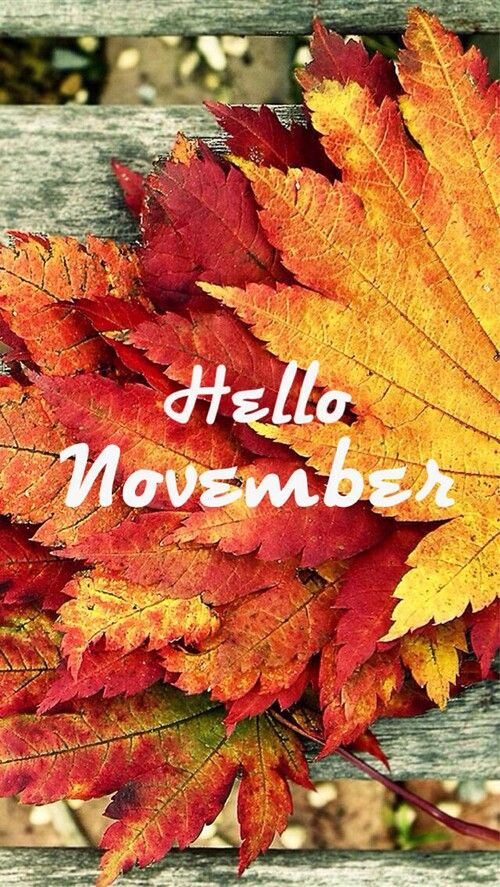 Hello November Hello November November Month November
