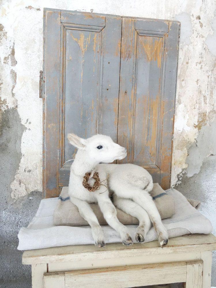 VERKAUFT Aba 02.07.  weißes Lamm altes Lehrmittel liegend
