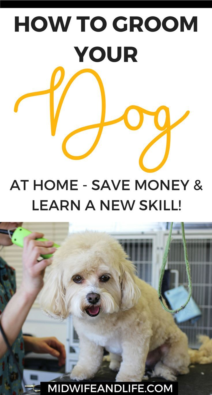 How To Save Money With These Home Dog Grooming Tips