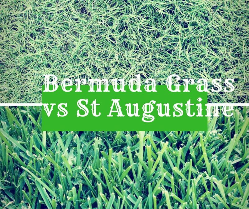 What Is The Difference Between Bermuda Grass Vs St Augustine Bermuda Grass Grass Care St Augustine Grass Care