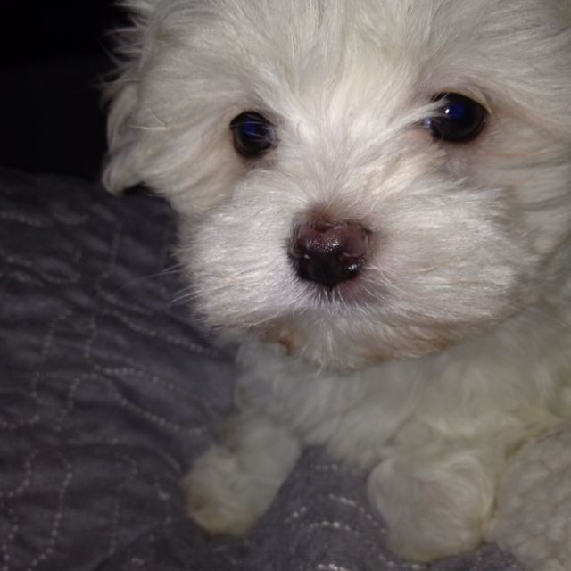 Our New Baby Boy Logan Maltese Animals New Baby Products