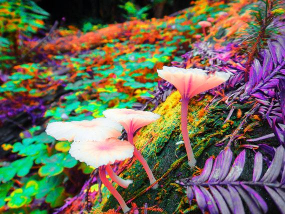 Nature photography 8x10 trippy neon mushroom print nature - Trippy nature wallpaper ...