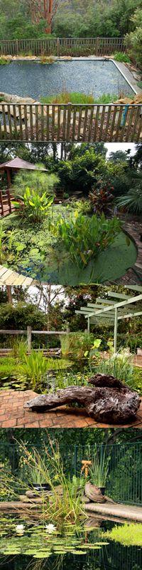 Convert pool to pond backyard pond swimming pools garden - Swimming pool to fish pond conversion ...