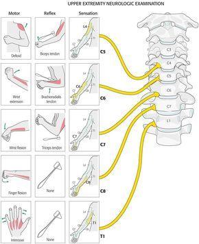 upper extremity neurologic examination