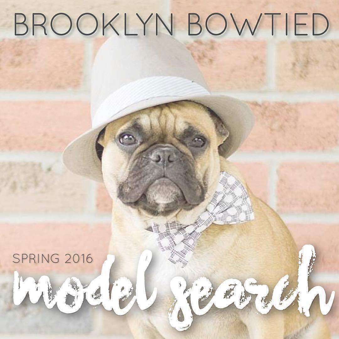 I think I would look pretty darn dapper in a @brooklynbowtied bowtie thank you very much.  #brooklynbowtiedsp16 __ #dogsinbowties #bowtie #dogbowtie #dapperdog #brooklyn #handmade #shopsmall #brooklynbowtied #madeinbrooklyn #rescuedog #adoptdontshop #etsy #dogsofbrooklyn #dogsofinstagram #etsygifts #barkbox #calledtobecreative #marthastewartpets #ohwowyes #dogsinbetween #ruffpost #pawpack #pawstruck #barkpack #bestwoof #dogsofinstaworld #houndsbazaar #creativelifehappylife by rufustagram