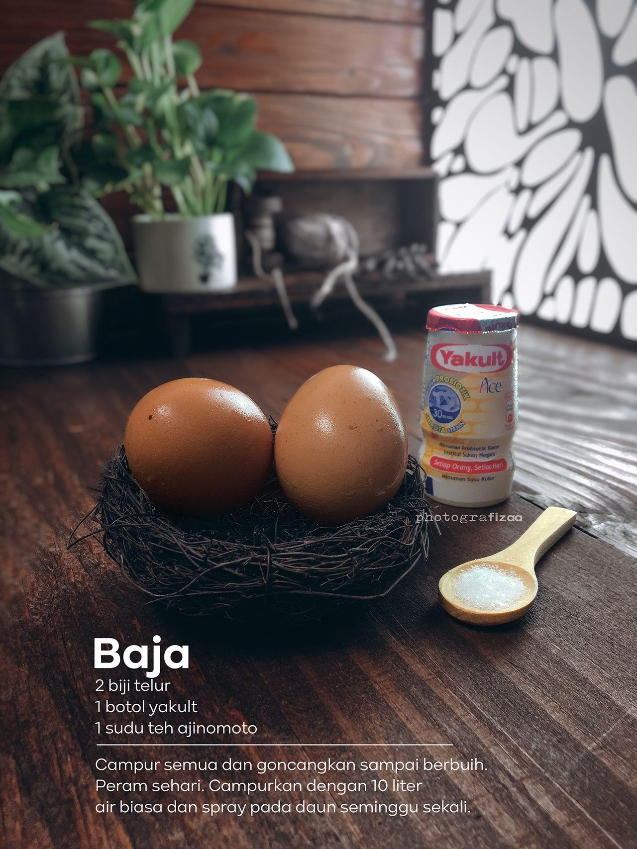 Percubaan Buat Dan Guna Baja Yakult Telur Dan Ajinomoto Telur Resep Sehat Resep