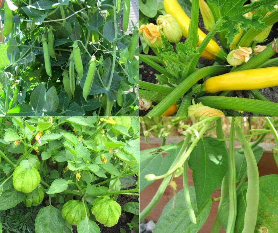 7 Things To Put On Tomato Planting Hole Easy Vegetables 640 x 480