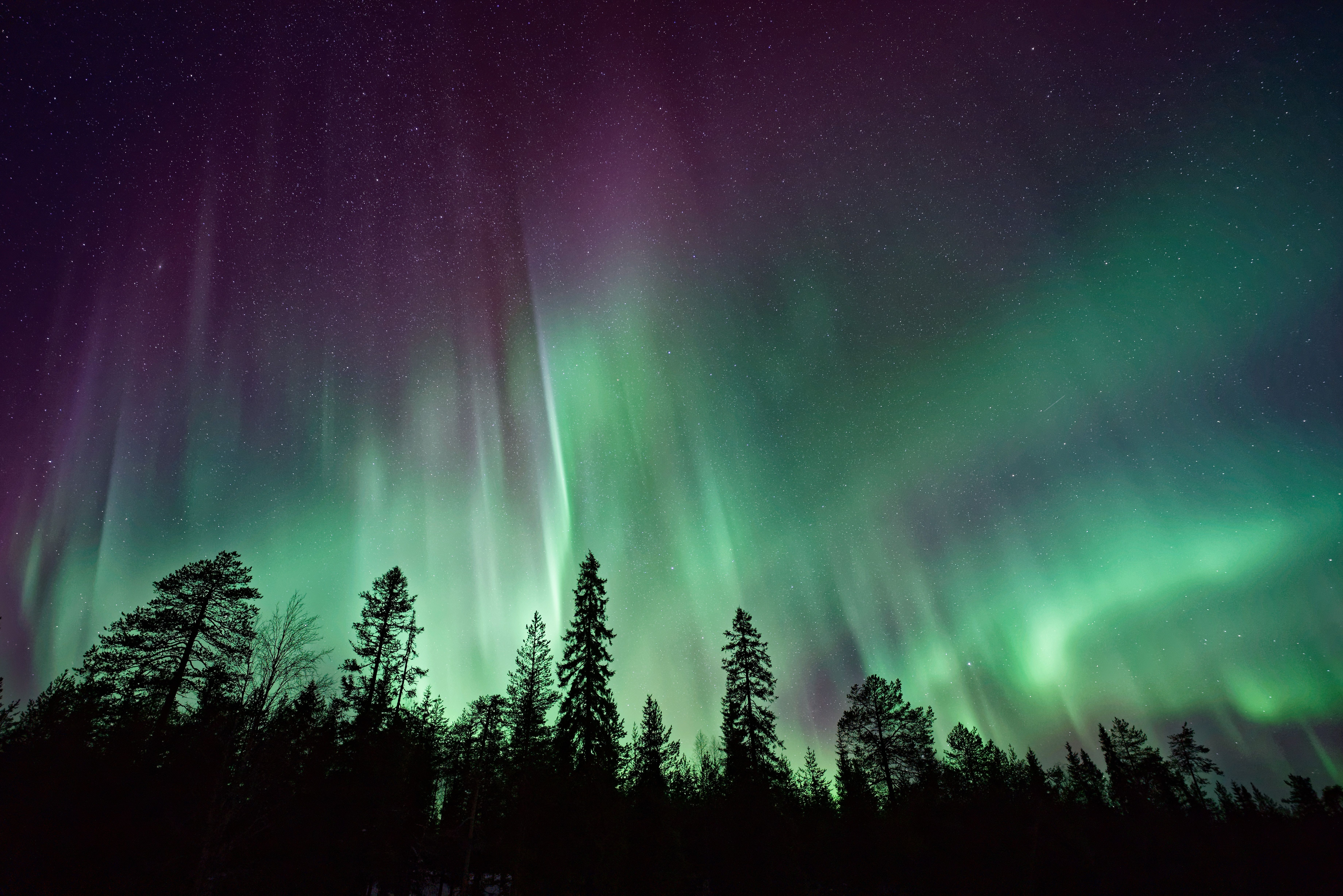 Hd Wallpaper Aurora Borealis On A Night Sky Over Silhouettes Of Trees Aurora Light Wa Northern Lights Wallpaper Northern Lights See The Northern Lights