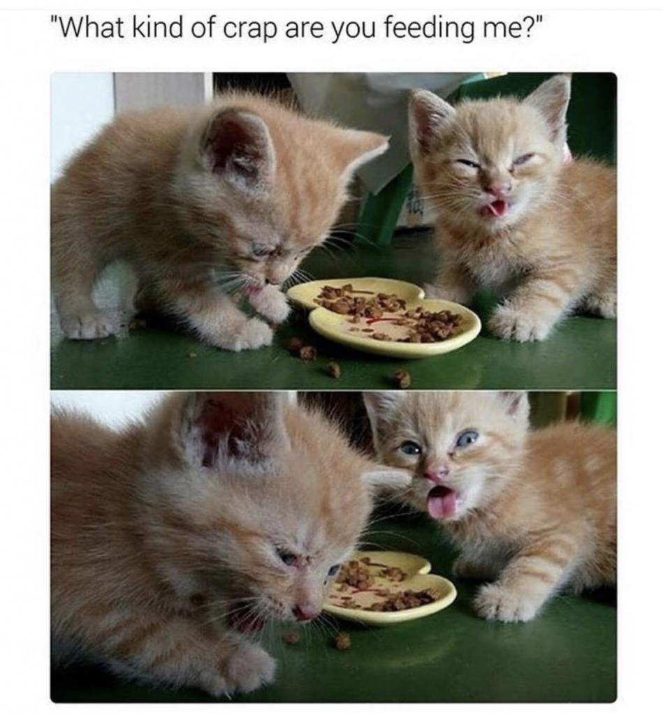 24 Funny Memes Animals Kittens Thug Life Meme Cute Baby Animals Funny Cats Funny Animals