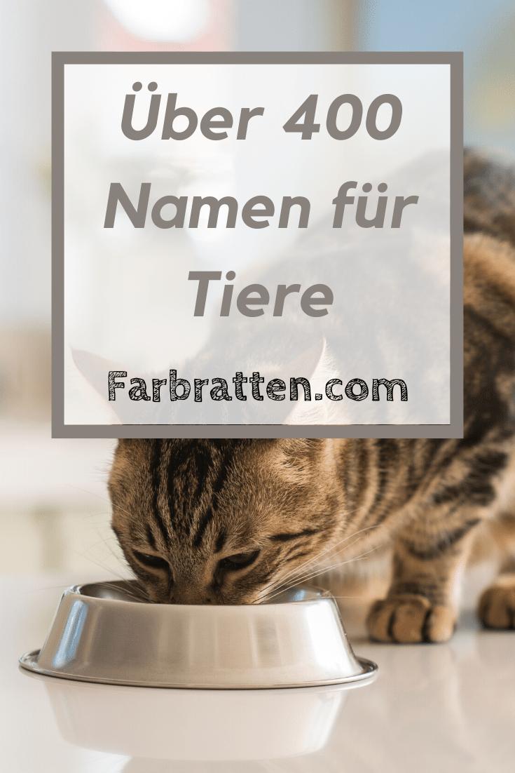 Namen Fur Tiere In 2020 Farbratten Namen Tiere