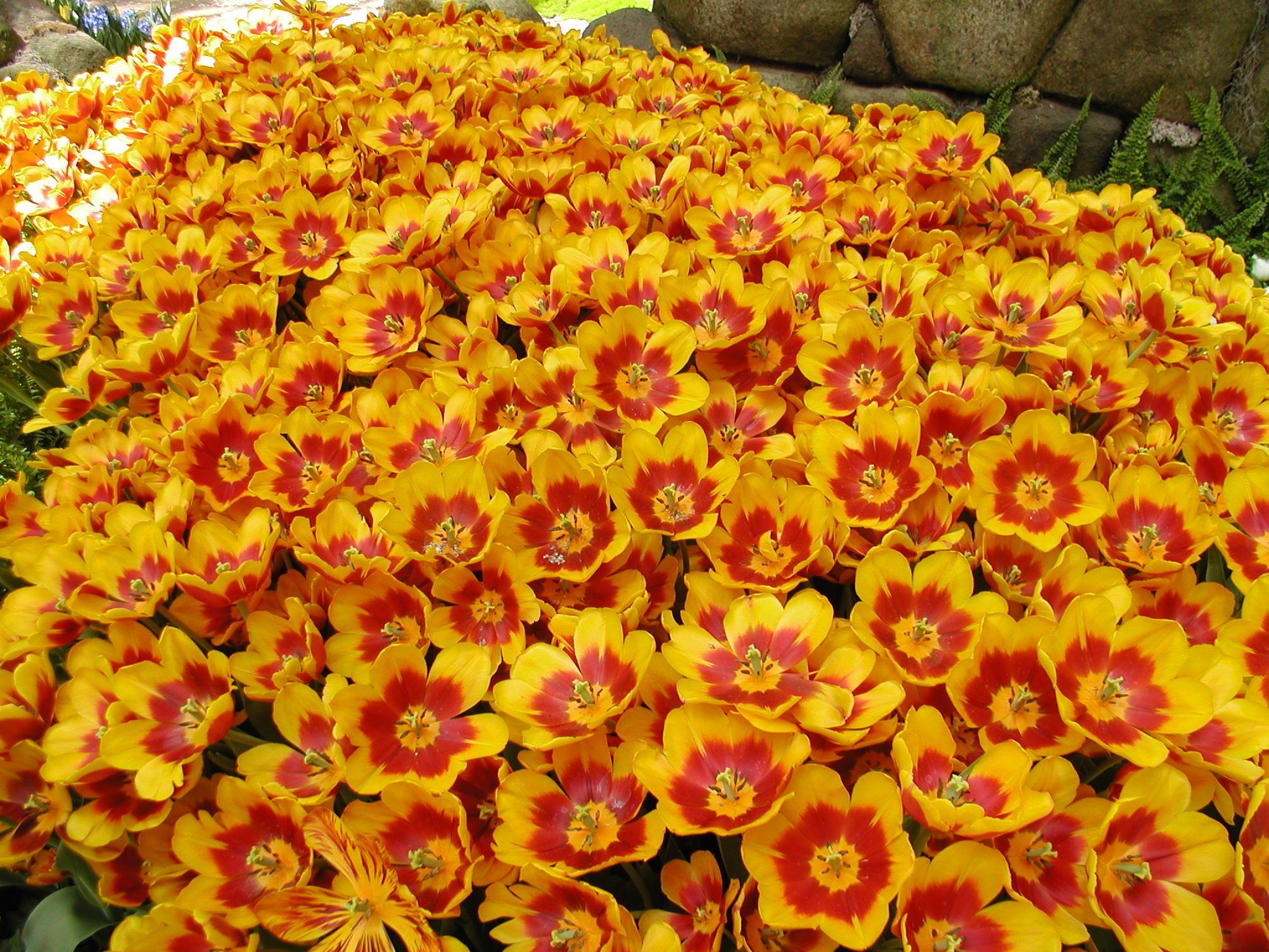 Yellow orange flowers las vegas orange flowers yellow orange flowers las vegas mightylinksfo