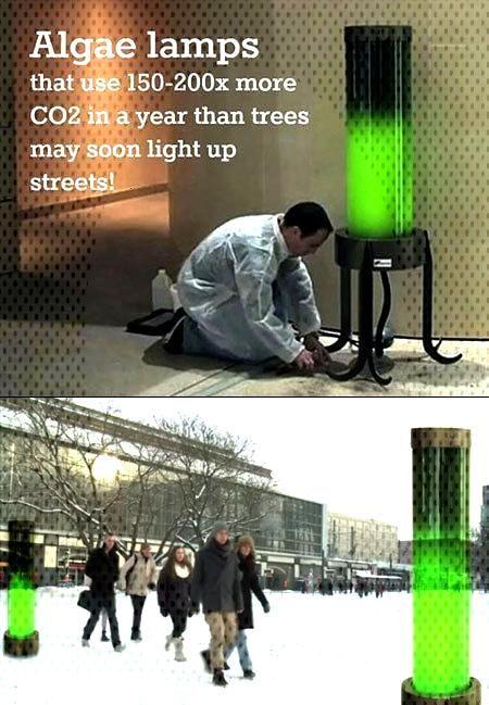 Algae Lamps! - enviropunk Techy Things: Algae Lamps!
