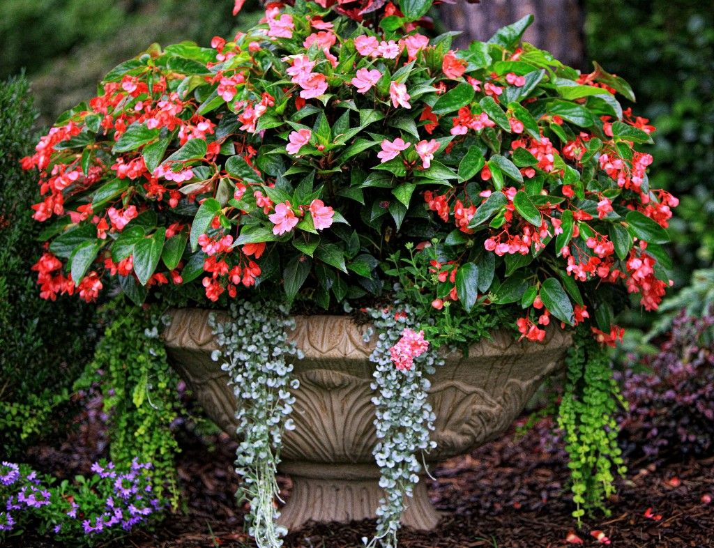 The Graceful Gardener S Containers Container Gardening Garden Containers Plants