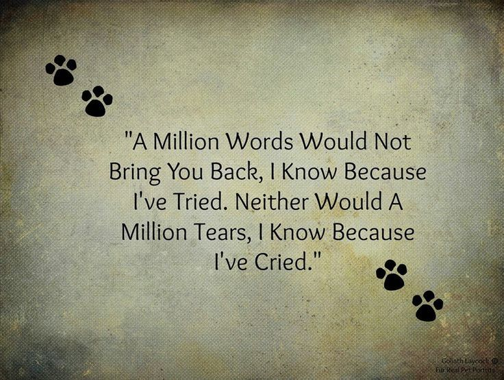 Image result for inspirational quotes about losing a dog ...