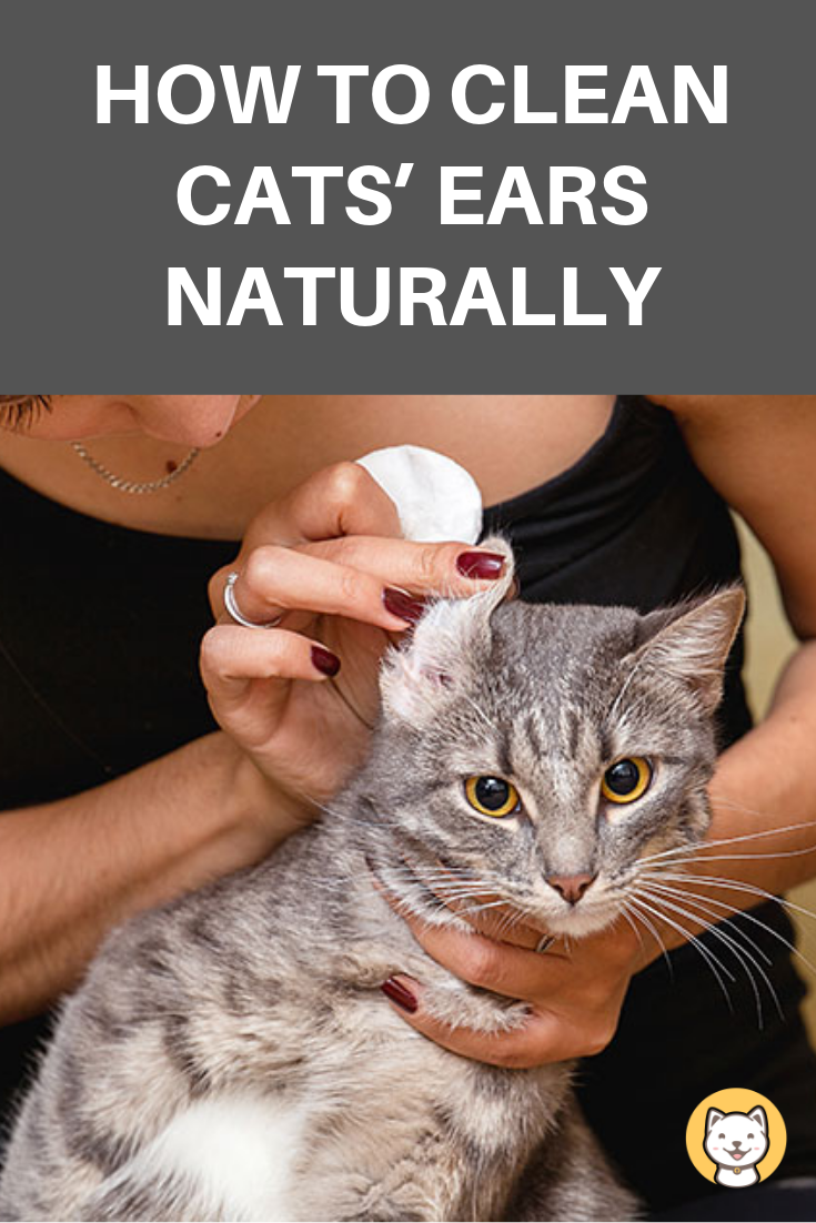 How To Clean Cats Ears Naturally Found Ultimate Guide Clean Cat Ears Cats Cats And Kittens