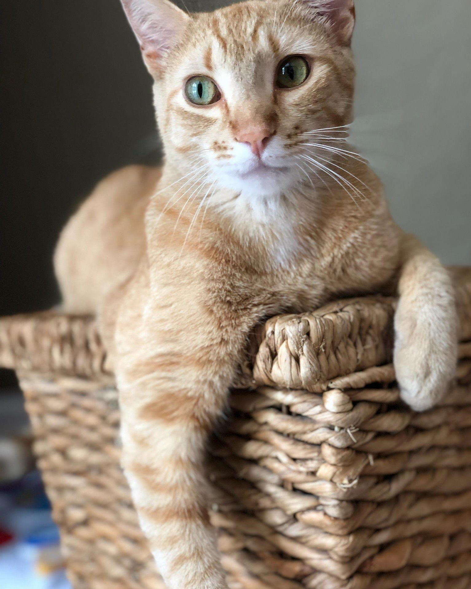 Pin By Cute Cats On Cute Cats And Kittens Cats Cute Cats Kittens