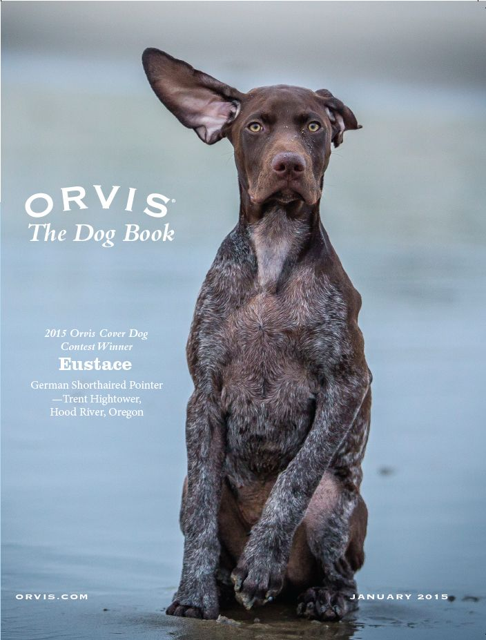 Announcing The Winners Of The Orvis Cover Dog Photo Contest Orvis News Gsp Puppies Pets Dog Photo Contest