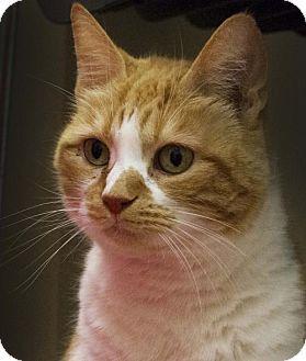 Philadelphia, PA - Domestic Shorthair. Meet *Zoe*, a cat for adoption. http://www.adoptapet.com/pet/12864211-philadelphia-pennsylvania-cat