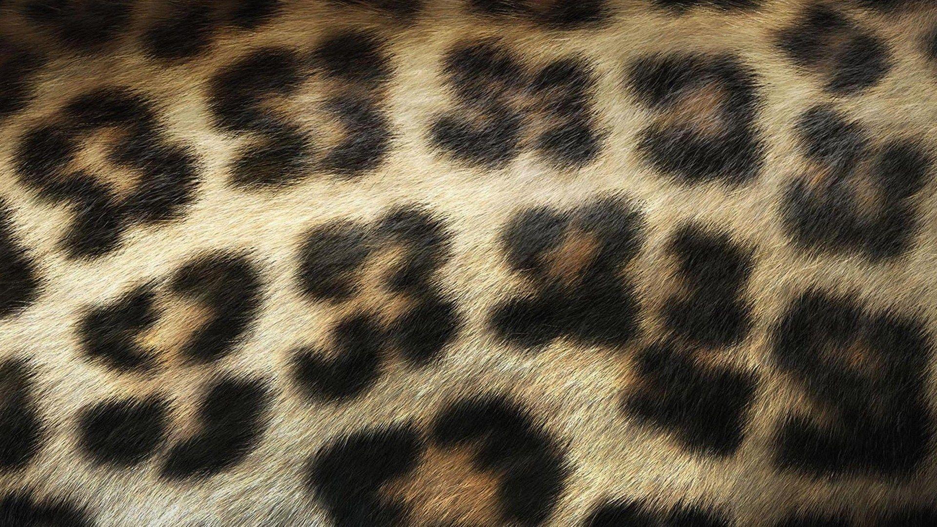 leopard print wallpapers hd free download