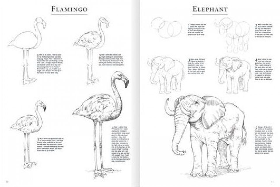 Image result for How to Draw Animals Step by Step Wild
