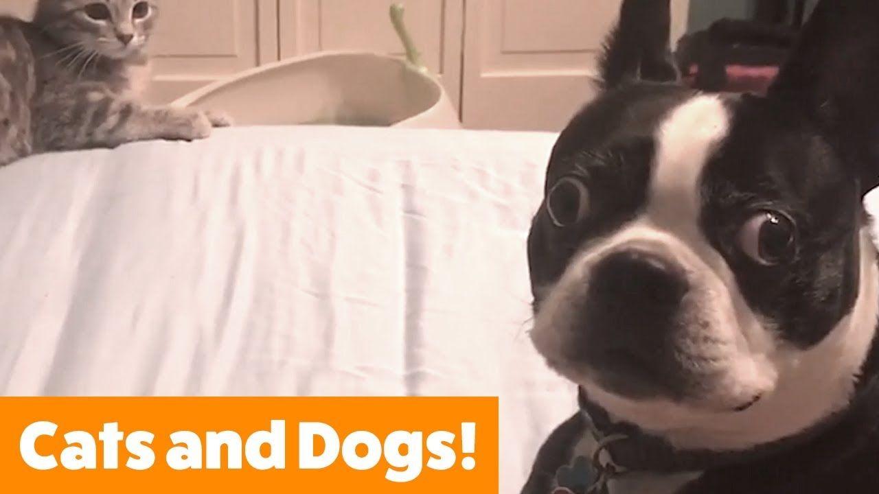Funny Animal Videos Download