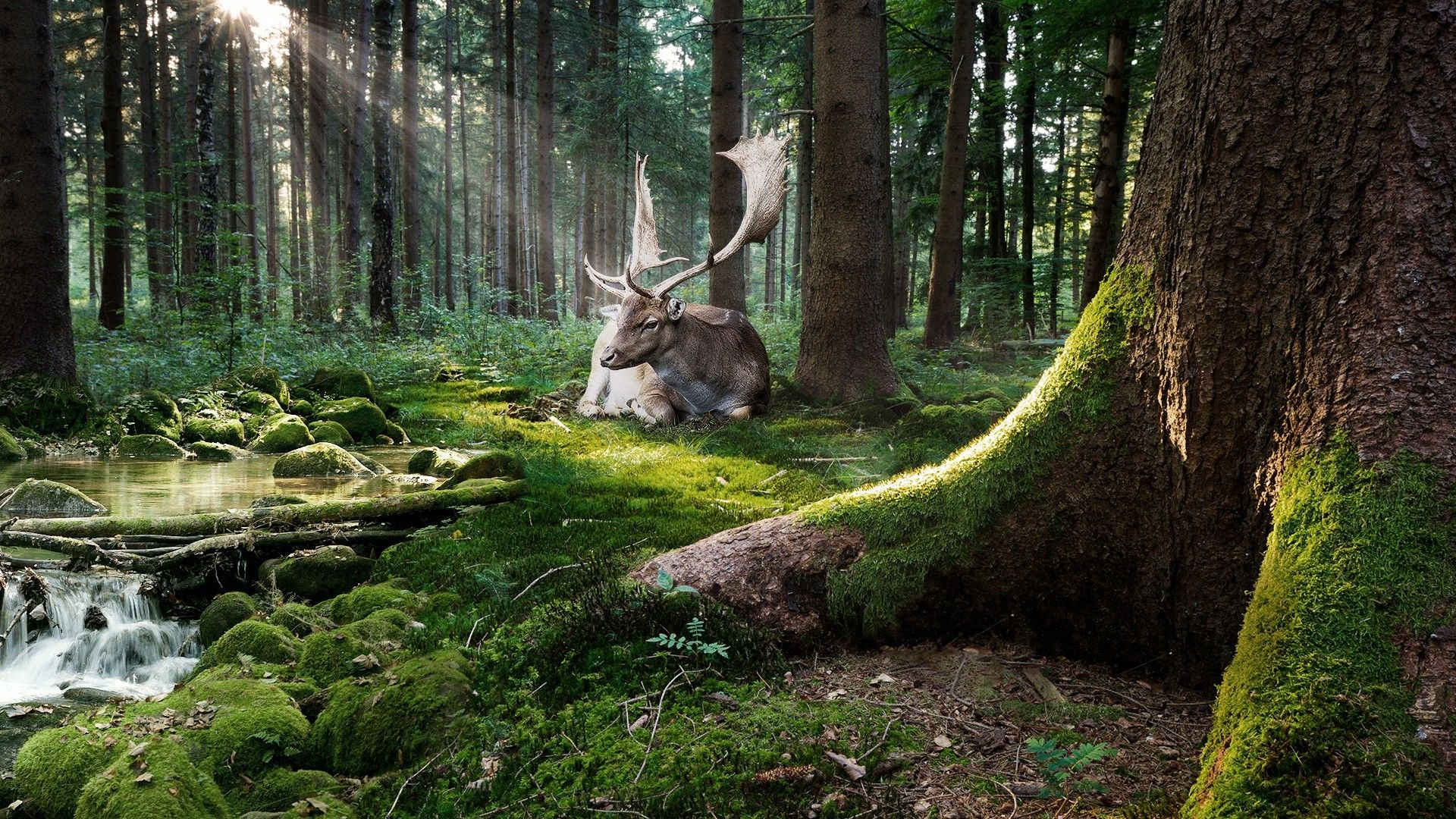 Nature Trees Forest Moss Animals Deer Sun Rays Stones Water Stream Adobe Photoshop Wallpaper Nature Forest Forest Wallpaper