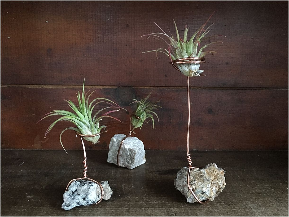 Diy Wire Air Plant Holders Air Plant Holder Plant Holder Diy Air Plants