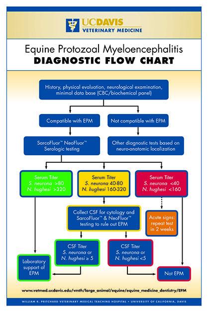 flow-chart.jpg (418×627) | Equine Health | Pinterest