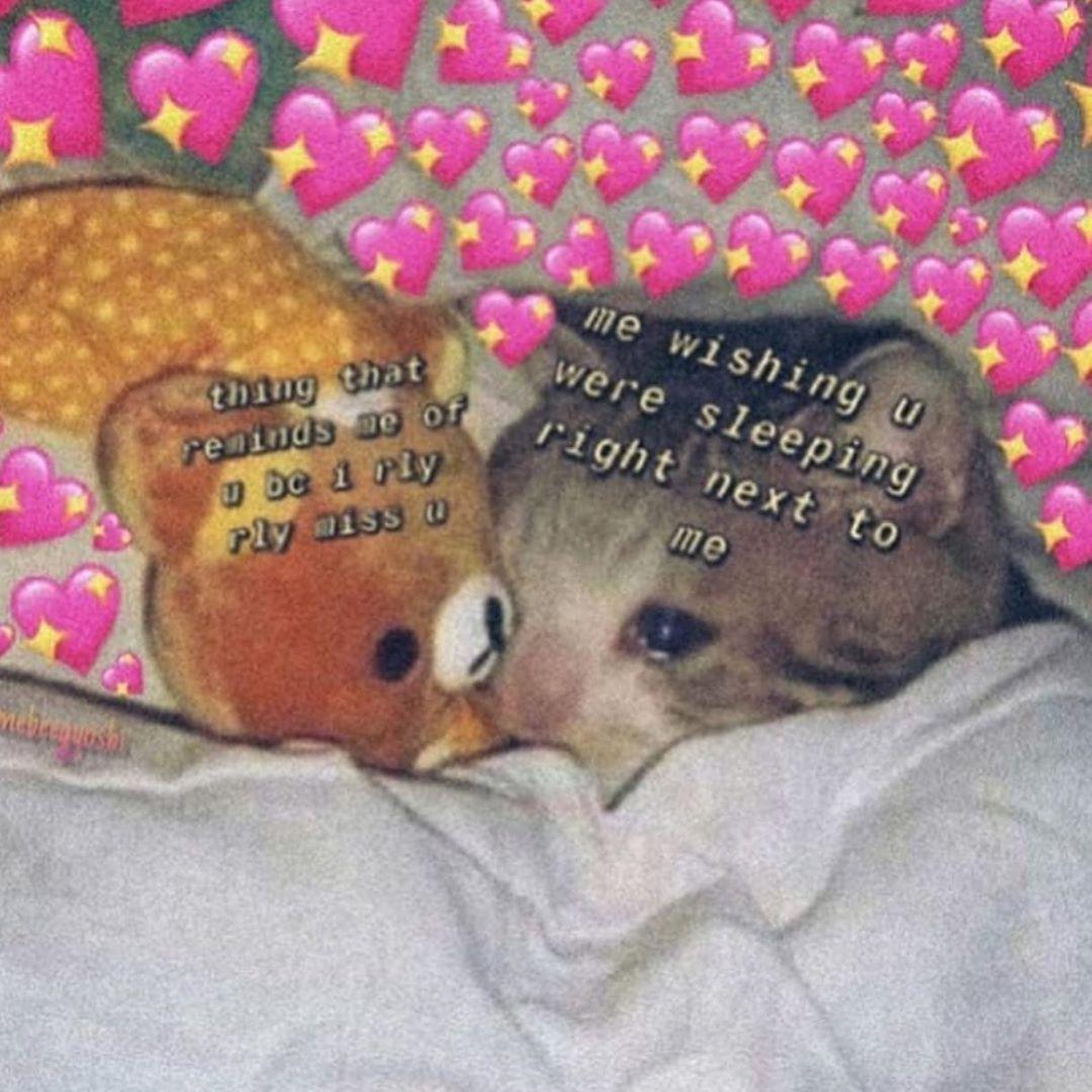 Pin by rat 🐀 on ︴memes; uwu Cute love memes, Cute memes