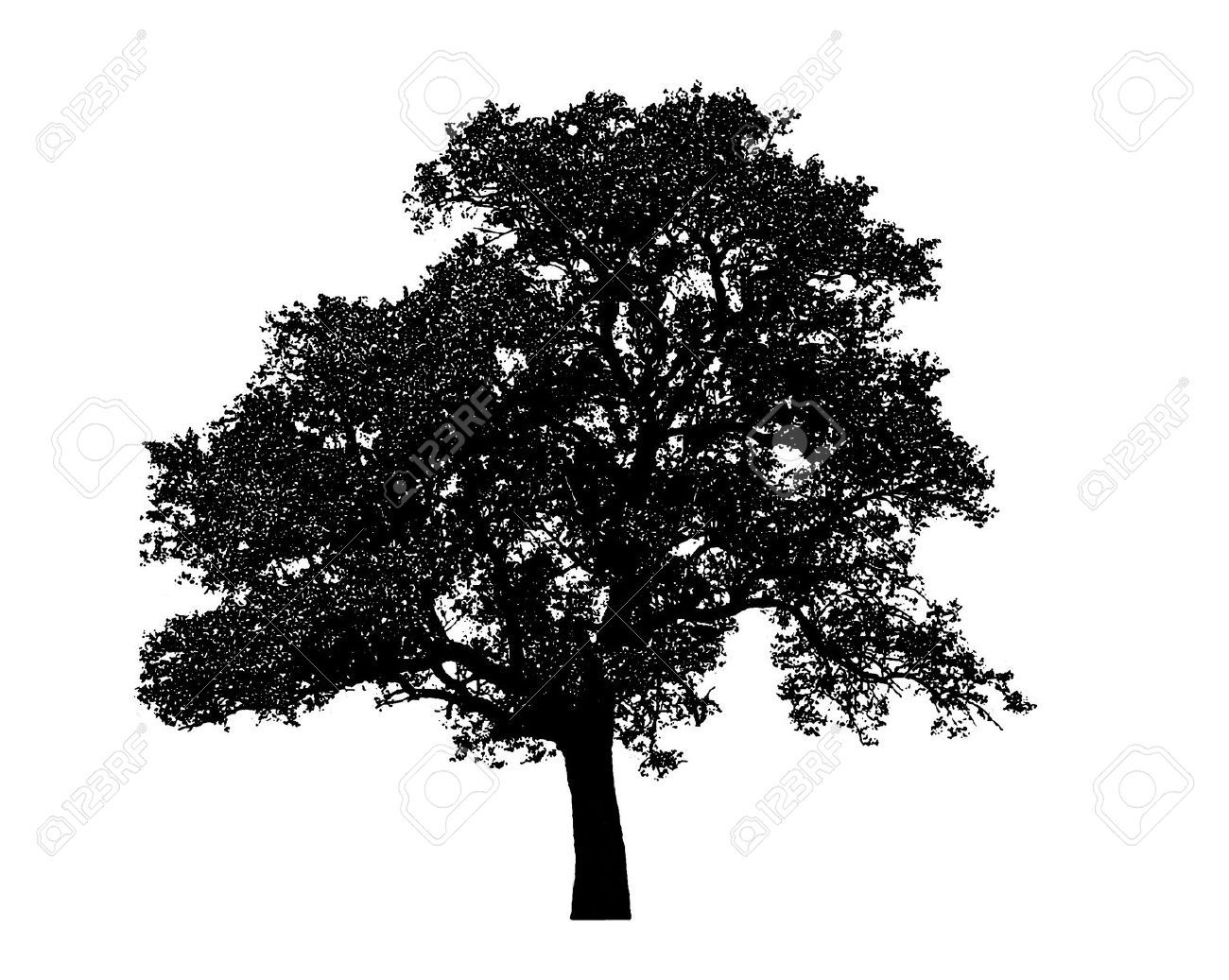 lonely black tree graphic isolated on white background stock photo trees pinterest. Black Bedroom Furniture Sets. Home Design Ideas