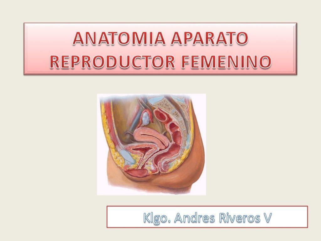 esercizi di prostata pdf