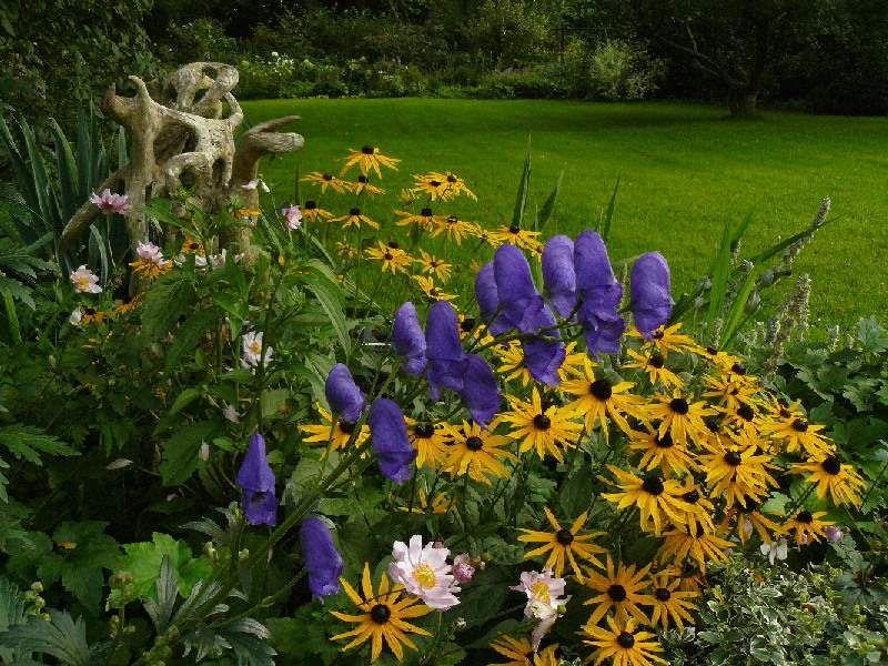 5 plantas perennes resistentes al fr o perennes plantas for Plantas perennes exterior